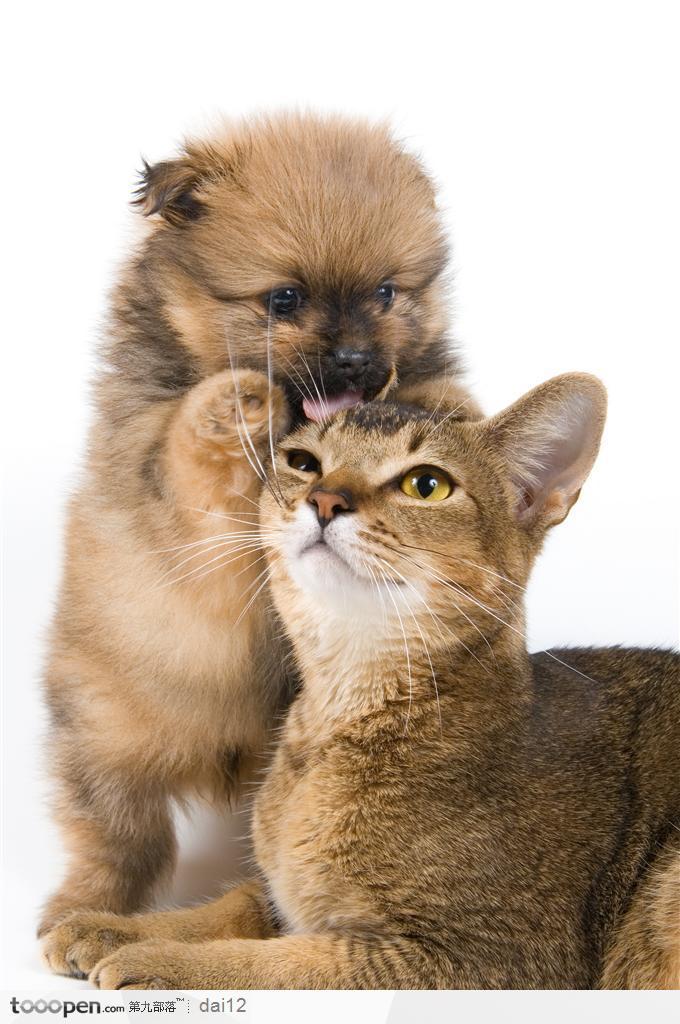 可爱猫,狗狗给你梳头发